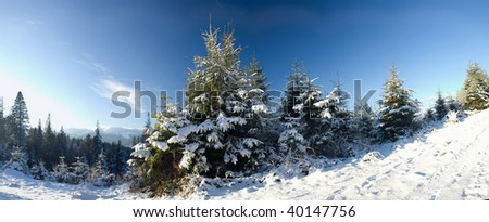 An image of a beautiful bright winter - stock photo