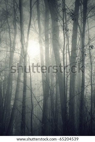 An image of a beautiful forest with fog in bavaria germany - stock photo