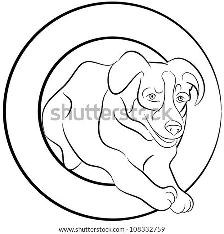 An image of a Border Collie dog jumping through a hoop.