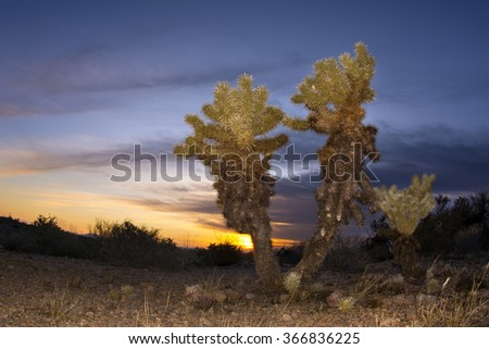 An image of a cholla cactus during sunset at Superstition desert in Arizona shows the rugged detail of a dry, parched wilderness - stock photo