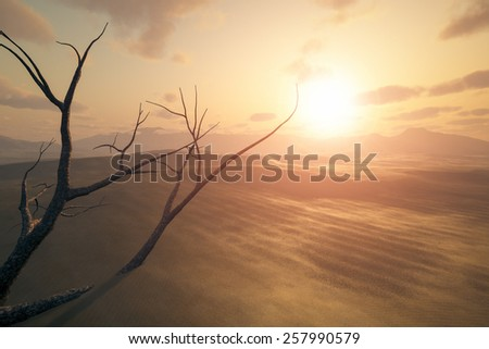 An image of a desert sunset with a dead tree in the sand - stock photo