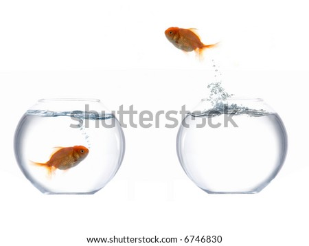 An image of a fish leaping out of the water - stock photo