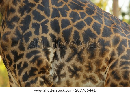 An Image of A Giraffe - stock photo