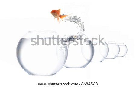 An image of a golden fish leaping out of the water