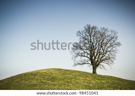 An image of a leafless tree on a hill - stock photo