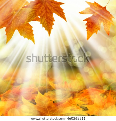an image of a leaves in autumn - stock photo