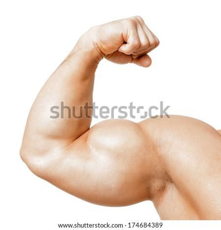 An image of a muscular biceps isolated on white - stock photo