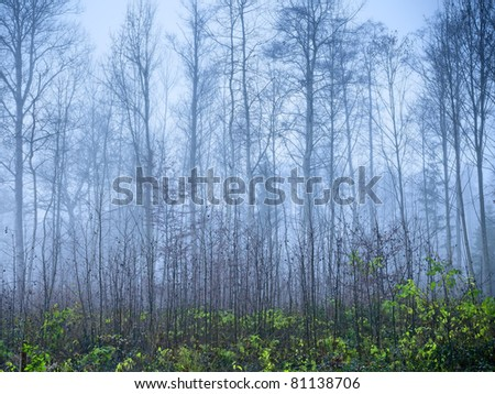 An image of a nice autumn forest background - stock photo
