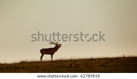 An image of a nice deer in the evening light - stock photo