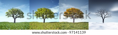 An image of a nice tree in four seasons - stock photo