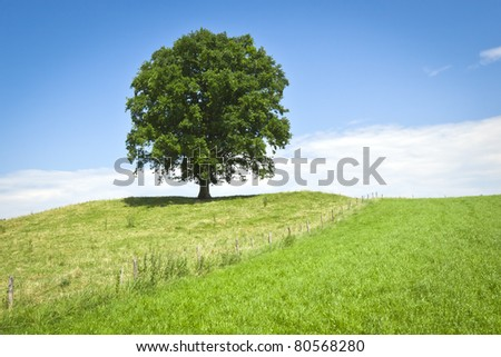An image of a nice tree in the meadow
