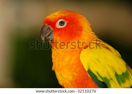 An image of a small parrot