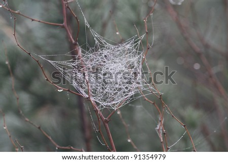 An image of a spider web with glowing dew drops - stock photo