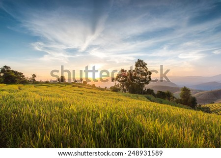 An image of a sunset over a golden field. - stock photo