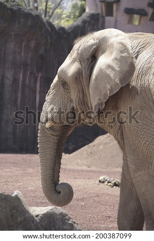An Image of African Elephant