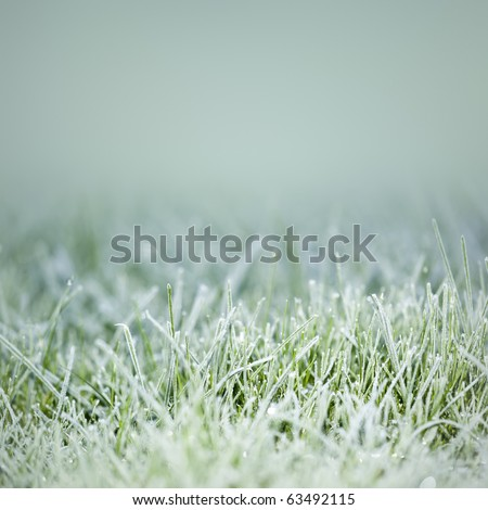 An image of an autumn icy grass - stock photo