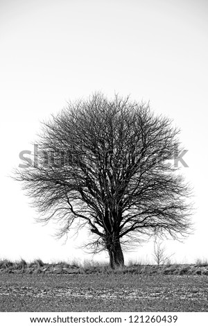 An image of an lonely tree - stock photo