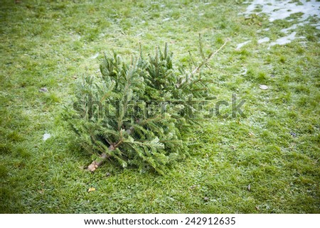 An image of an used christmas tree in the grass - stock photo
