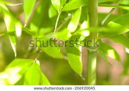 An Image of Bamboo Leaf