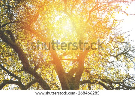 An image of Beautiful autumn yellow leaves - stock photo