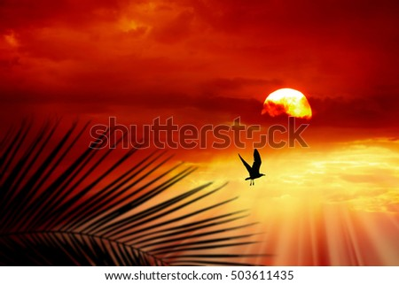 an image of bird flying and sunset