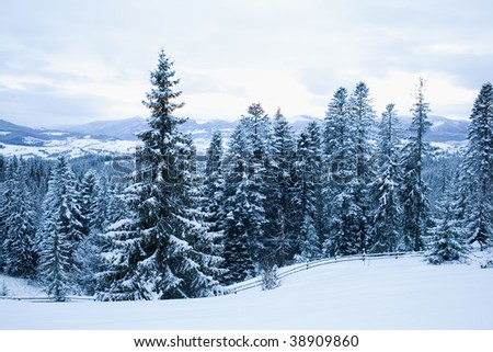An image of blue winter in the mountains