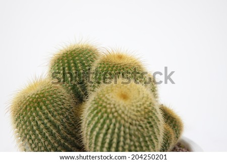 An Image of Cactus