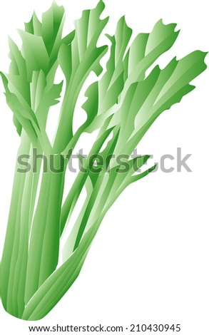An Image of Celery