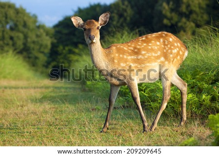 An Image of Deer In Nara