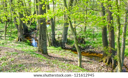 An image of dike in the forest - stock photo