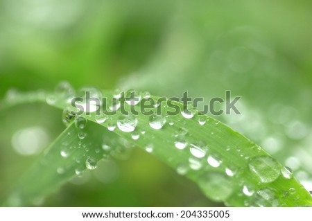 An Image of Drop Of Water - stock photo