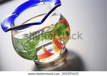An Image of Fishbowl