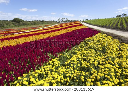 An image of Flower World Nasu