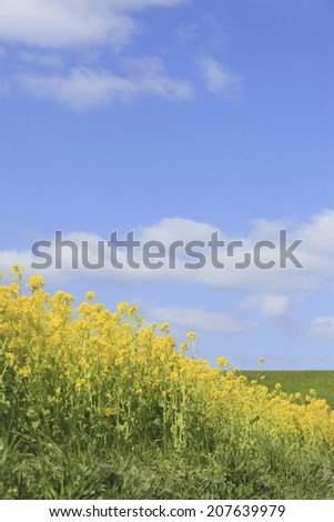 An Image of Flowers And Sky