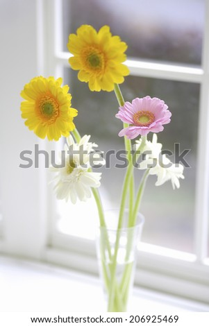 An Image of Gerbera