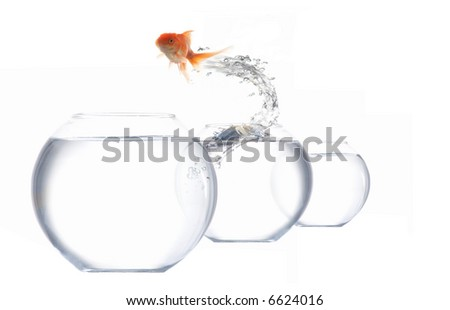 An image of goldfish leaping out of the water - stock photo