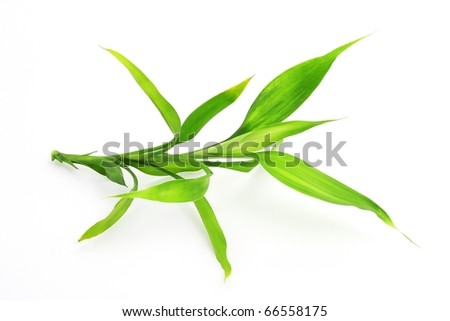An image of green bamboo on white background