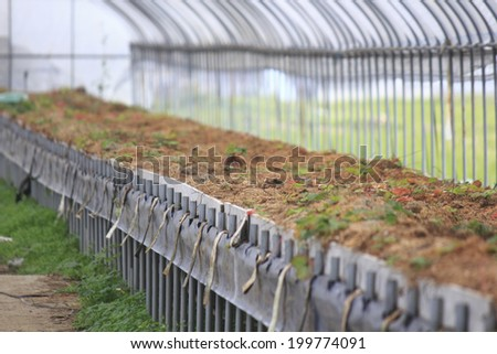 An Image of Greenhouses