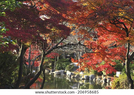 An Image of Kyoto ,Autumn Leaves