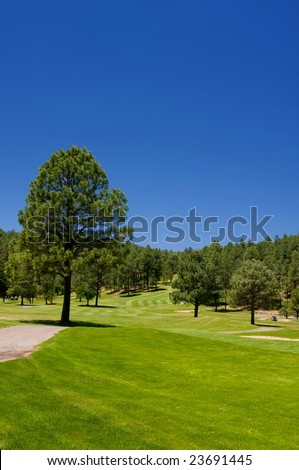 An image of large lush trees spread throughout an Arizona golf course - stock photo