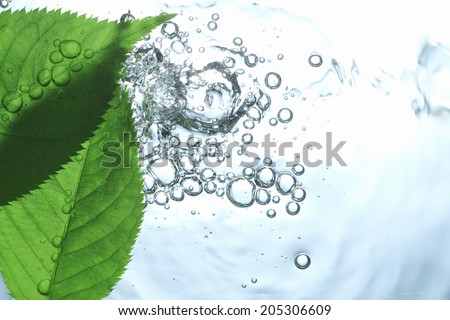 An Image of Leaf And Water - stock photo