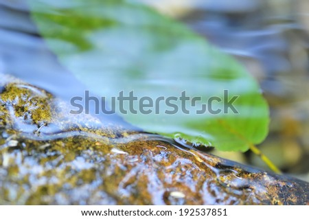 An image of Leaves of one piece to soak in water