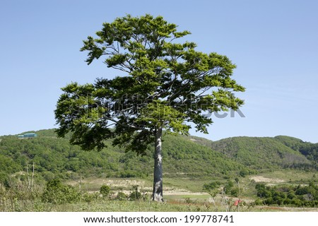 An Image of One Tree