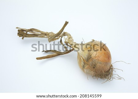 An image of Onions With Mud