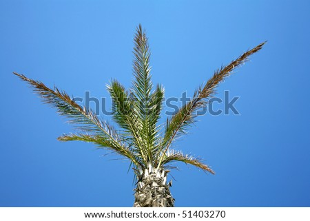 an image of palm tree and blue sky