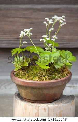 An image of Potted plants