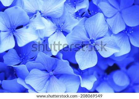 An Image of Purple Hydrangea