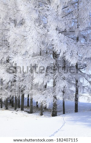 An image of Rime