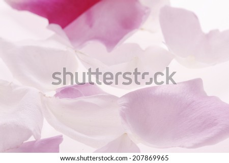 An Image of Rose Petals