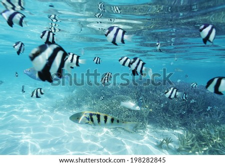 An Image of School Of Fish